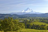 Mt. Hood und Hood River Valley.
