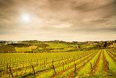 Chianti Region, Panzano Weinberg, Bäume und Farm am Sunset Boulevard. Toskana, Italien