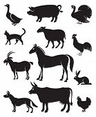 foto of horses eating  - monochrome illustration of twelve farm animals - JPG