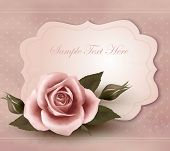 Rose with a vintage greeting card. Vector.