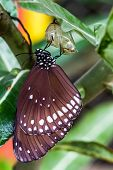 pic of cocoon  - Butterfly  - JPG