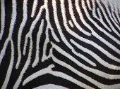 Details Of Zebra