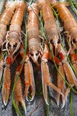 stock photo of norway lobster  - Marine Product Presentation And Preparation Of The Crayfish - JPG