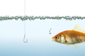 pic of fishbowl  - goldfish in an aquarium watching a hook - JPG