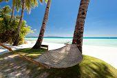 Empty Hammock Near Coconut Palms