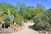 The Organ Pipe Cactus