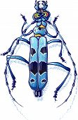 Beautiful spotted blue beetle