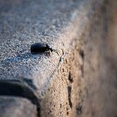Bug`s Decision