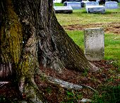 stock photo of scrooge  - Very old forgotten tombstone beside very large tree that is very old - JPG