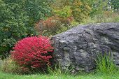Red Bush & Rock