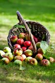 Fresh and colorful apples in basket, selective focus