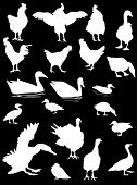 illustration with poultry silhouettes isolated on black background