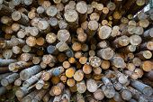 Firewood in the stack
