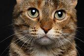 close-up battle-seasoned cat