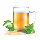 stock photo of hop-plant  - Glass of beer hops and barley  - JPG