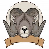 illustration of a sheep with horns