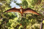 foto of prehistoric animal  - Pterodactyl  - JPG