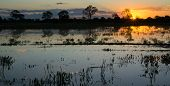 pic of lapacho  - High contrast Sunset in Brazilian Pantanal with ipe trees and water