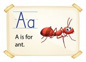 illustration of a flashcard letter A for ant