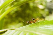 pic of ant  - Ants mating in green background nature stock shot with ants in middleground - JPG