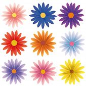 image of daisy flower  - Isolated Vector Flower Collection - JPG