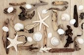 picture of driftwood  - Shell and driftwood abstract design over old oak background - JPG