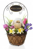 stock photo of spring lambs  - An adorable toy lamb in a wire basket surrounded by spring flowers and a welcome sign adorning the handle - JPG