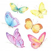 image of insect  - Collection watercolor of flying butterflies - JPG