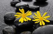 pic of wet  - two yellow flower with wet stones on wet  - JPG