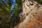 picture of redwood forest  - Looking man with backpack climbing on big tree in Redwood California during summer sunny day - JPG