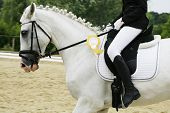 stock photo of horse head  - Side view portrait of a beautiful grey dressage horse during work First prize rosette in a dressage horse - JPG
