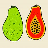 picture of pawpaw  - Papaya vector Illustration - JPG
