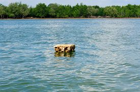 picture of polution  - Polystyrene float on the green water sea polution - JPG