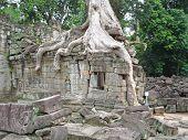 image of mahabharata  - Banyan tree covering an old khmer pyramid temple  - JPG