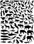 picture of animal silhouette  - Collection of a wide range of wild animal silhouettes - JPG