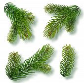 Christmas Tree Branches Set For A Christmas Decor. Branches Close-up. Collection Of Fir Branches. Re poster