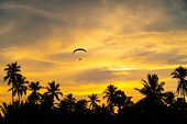 Man Is Riding Para Motor In Beautiful  Sunset Cloud Sky And Coconut Trees In Background. poster