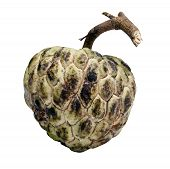 Anone Fruit With Clipping Path