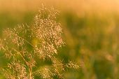 Blurred Bokeh Natural Evening Meadow In The Sunset Light poster