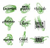 Vegetable Icons And Signs, Lettering. Cucumber And Sweet Or Chili Pepper, Avocado And Artichoke, Oli poster