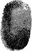 Vector fingerprint on white background
