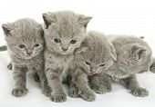 Four small funny kittens. Isolated on white background
