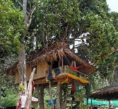 treehouse on the beach thailand