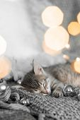 A Cute Gray Kitten Lies On A Gray Plaid In A Christmas Decoration.  Christmas Home Decor poster