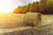 Haystacks On The Empty Field After Harvesting Illuminated By The Warm Light Of Setting Sun. Altay Re poster