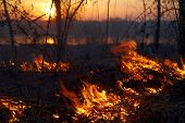stock photo of novosibirsk  - Fire in siberian forest near Novosibirsk Russia