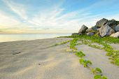 pic of ipomoea  - The landscape of the beach with the rock and ipomoea - JPG