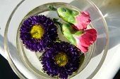 close-up purple & pink flowers in a bowl