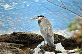 A Wild Bird On A River Bank