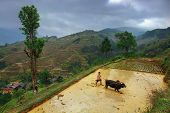 Chinese Farmer Cultivates Land Plow, Using The Power Of The Buffalo, Guizhou Province, China.
